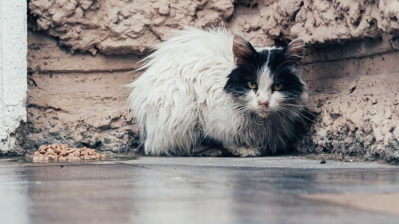 A homeless black and white cat stock images