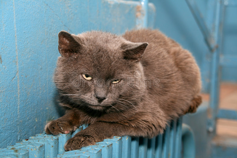 Homeless cat. On the battery royalty free stock image