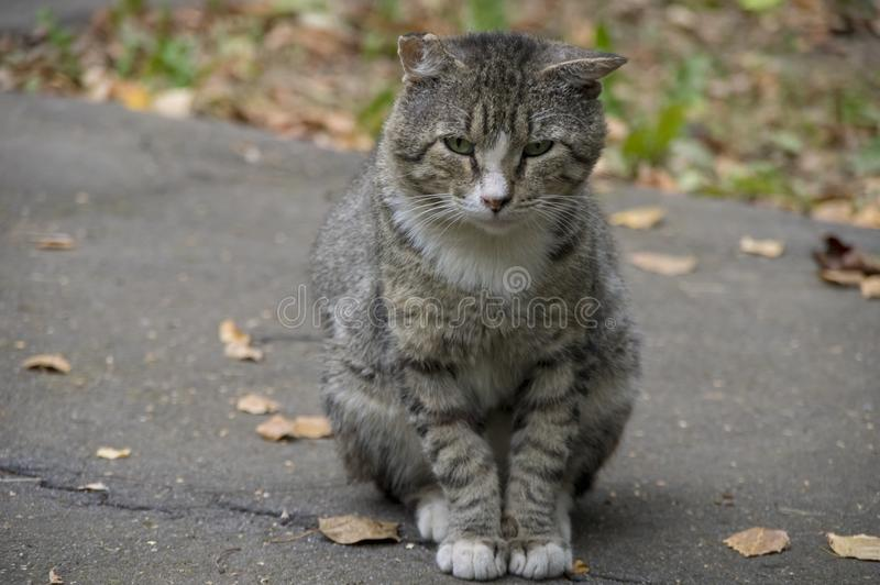 Homeless cat in autumn city royalty free stock photography