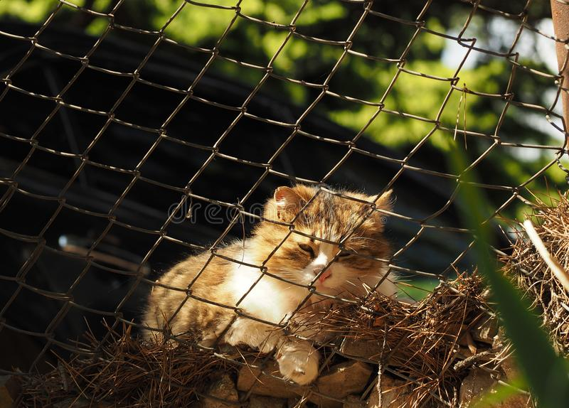 Homeless cat behind the bars. Outside. sunny days royalty free stock image
