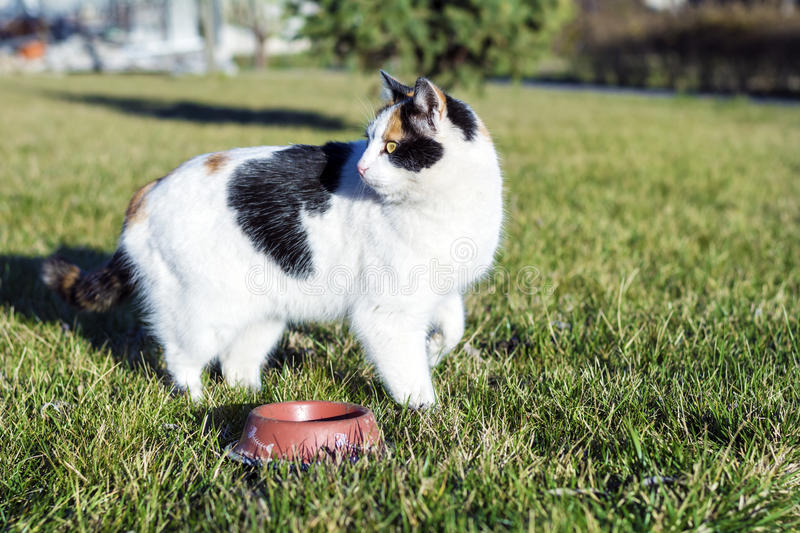 Homeless cat eating on a green grass stock images