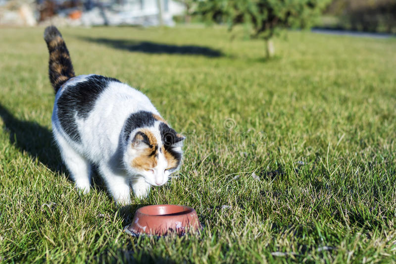 Homeless cat eating on a green grass royalty free stock photography