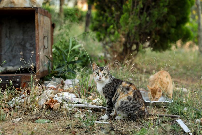 Homeless cat looking for food near the trash can. Athens, June 2018. Horizontal stock photography