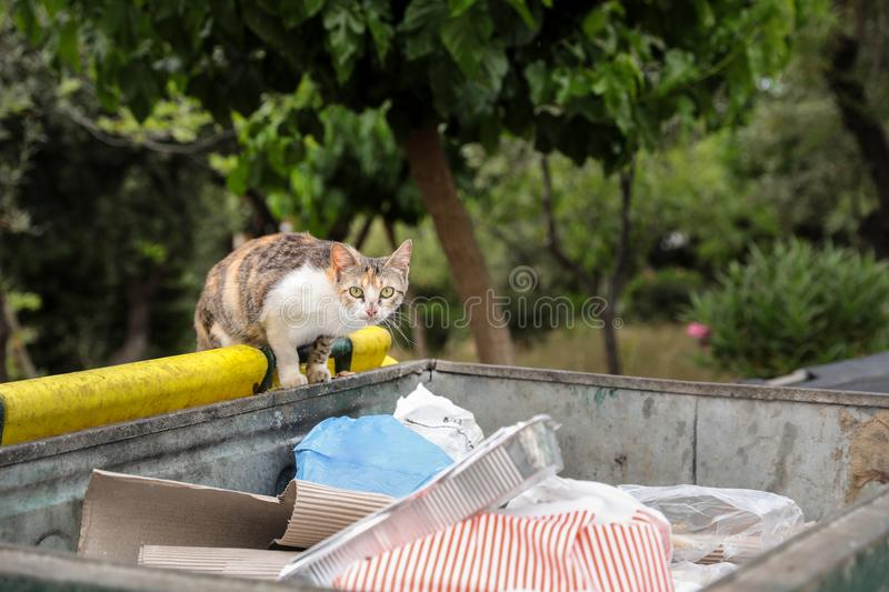 Homeless cat looking for the remains of food in the garbage can. Athens, June 2018. Horizontal. Close-up royalty free stock photos