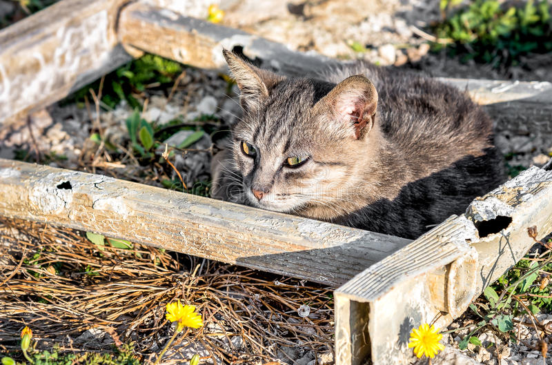 Homeless cat lying on meadow stock images