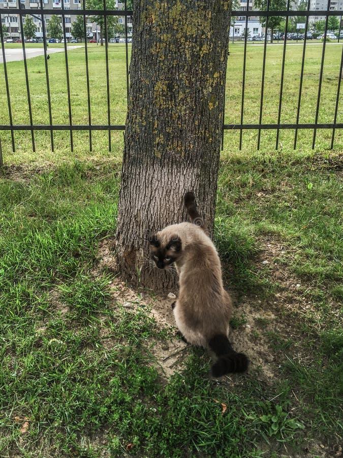 Homeless cat near tree royalty free stock photography