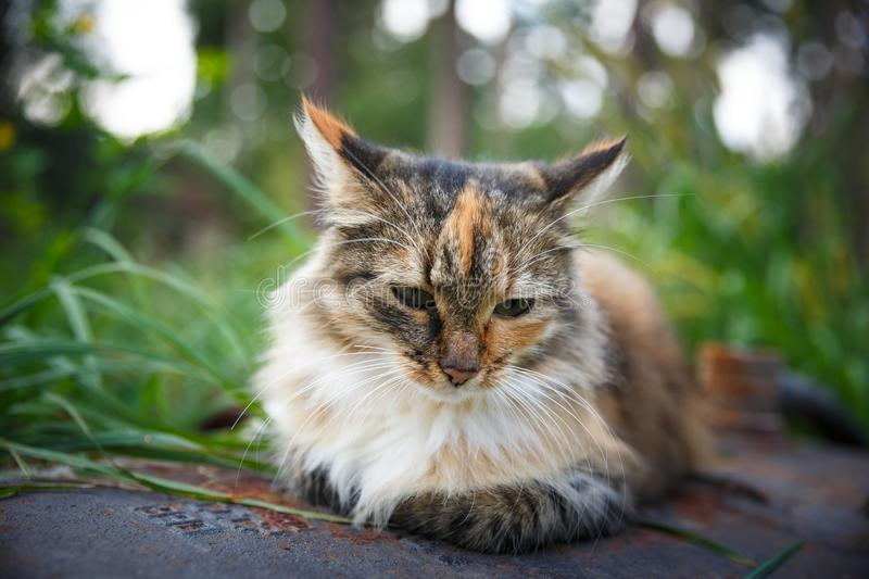 Homeless cat in the poor house for animals. Abandoned cat in a home shelter. Homeless cat in the poor house for animals. Old fluffy cat. Abandoned cat in a home royalty free stock photography