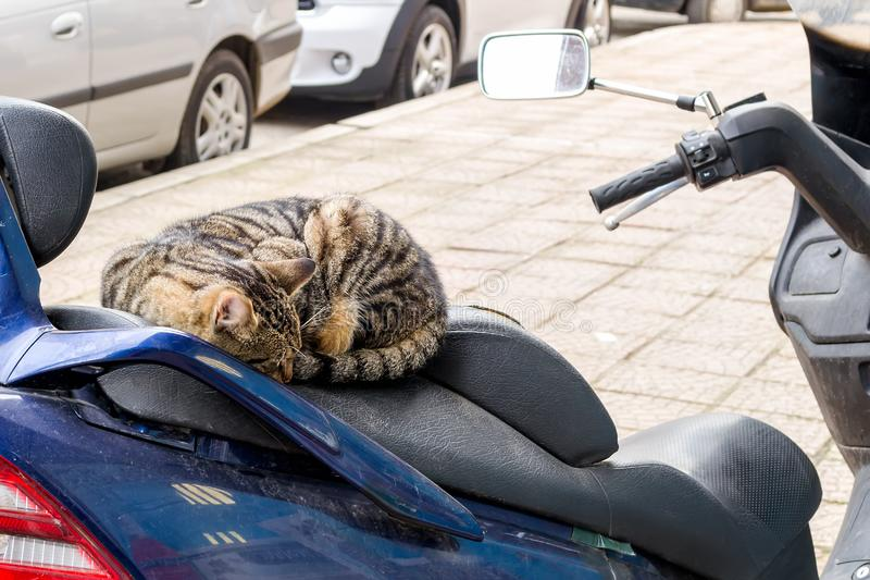 Homeless cat rests on motorbike seat. Stray tabby cat curled up into ball and sleeping on the seat of a parked motorcycle or stock photography