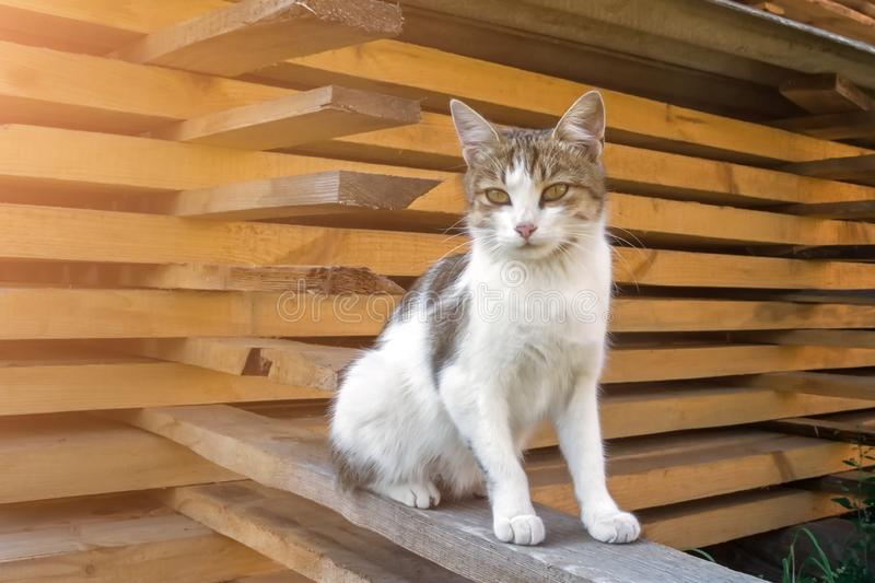 A homeless cat sits on a beam near a mountain of folded boards stock photography