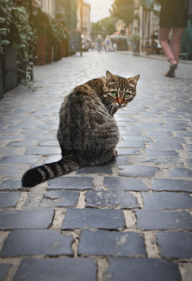 A homeless cat is sitting on the street. stock photos
