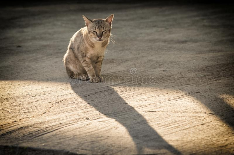 Homeless cat sitting on the street.poor and sick Stray cat on the road under evening sunlight royalty free stock image