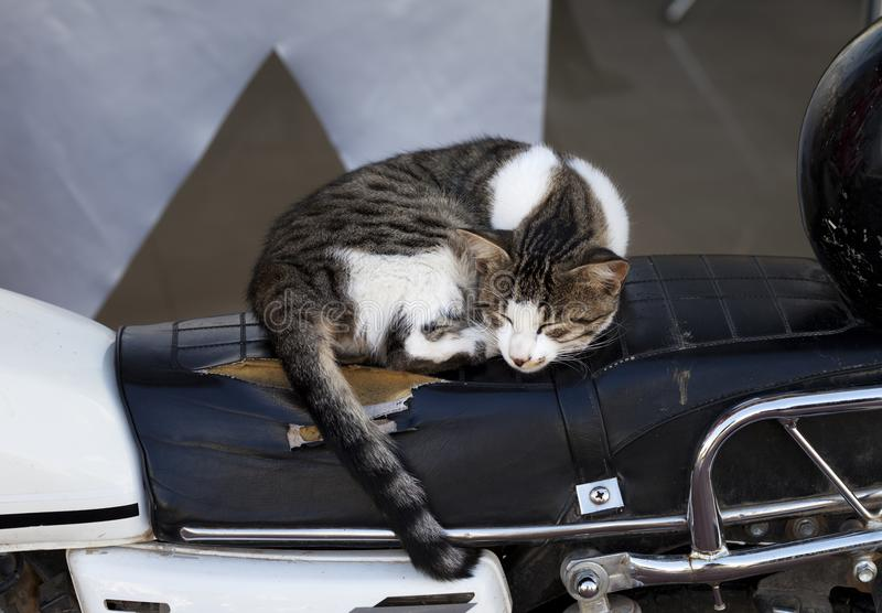 Homeless cat sleeping at seat of old motorbike royalty free stock image