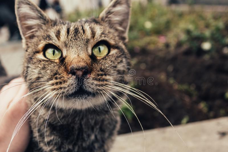 A homeless cat on the street stock image