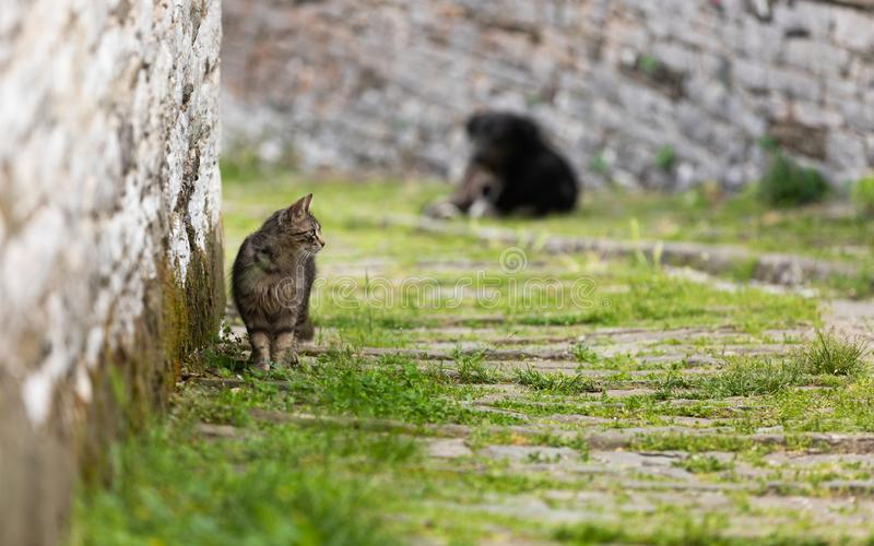 Homeless cat walking in a rural back alley stock image