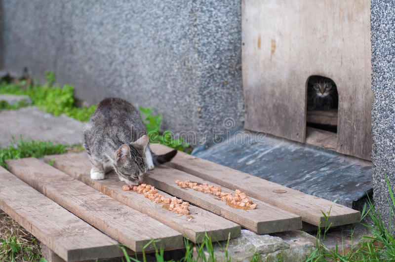 Homeless cats eat cat food. Homeless unhappy hungry cats eat cat food stock images