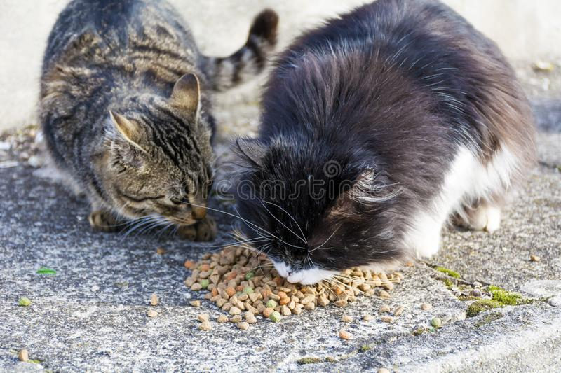 Cats Eating Dry Food royalty free stock photography