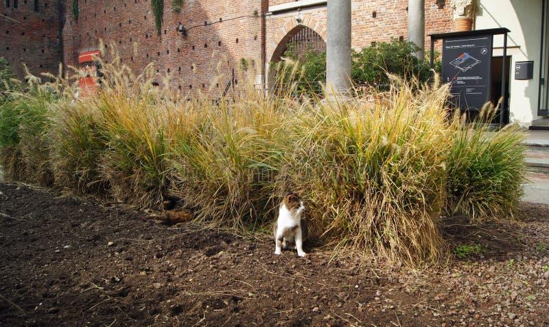 Homeless cats family in Castello Sforzesco aka Sforza Castle Milan stock photo