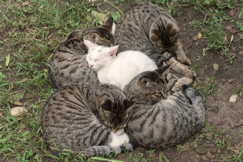 Homeless cats sleep royalty free stock image