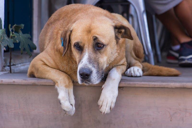 homeless Chien égaré Une tête d'un chien image libre de droits