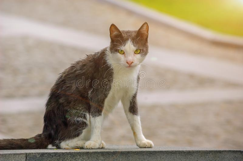 Homeless dirty cat sitting on the road stock photo