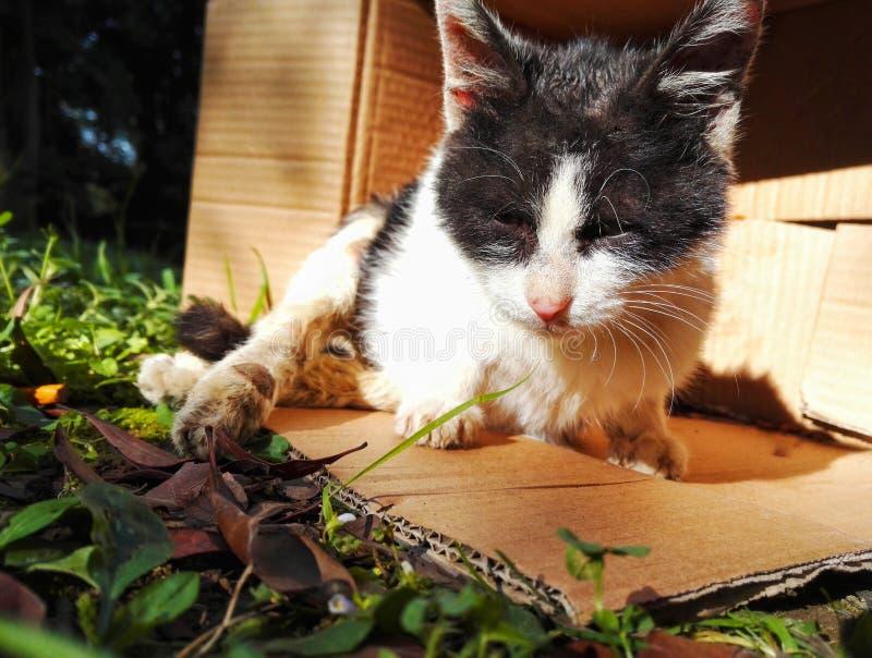 Disabled stray cat stock photos
