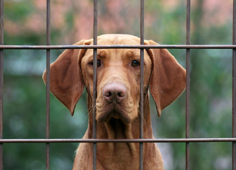 Download Homeless dog stock image. Image of animal, canine, domestic - 25225817