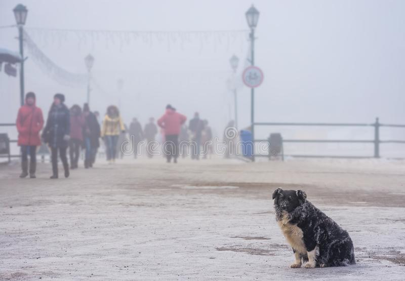 Homeless dog with frozen fur. Sitting near the bridge in winter fog. blurred background with crowd of people moving along royalty free stock photo
