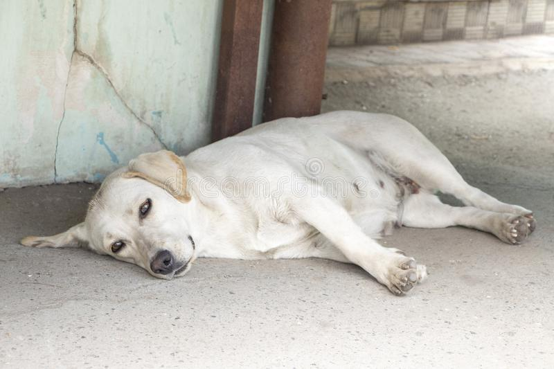 Homeless dog.Hungry mongrel is tired. Lonely, sad dog lying on the street waiting for the owner. Depressive photo. The concept of stock photography