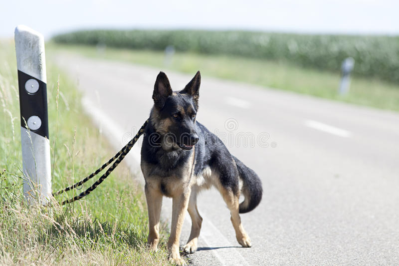 Homeless dog leave alone on streetside waiting for animal shelter.  stock image