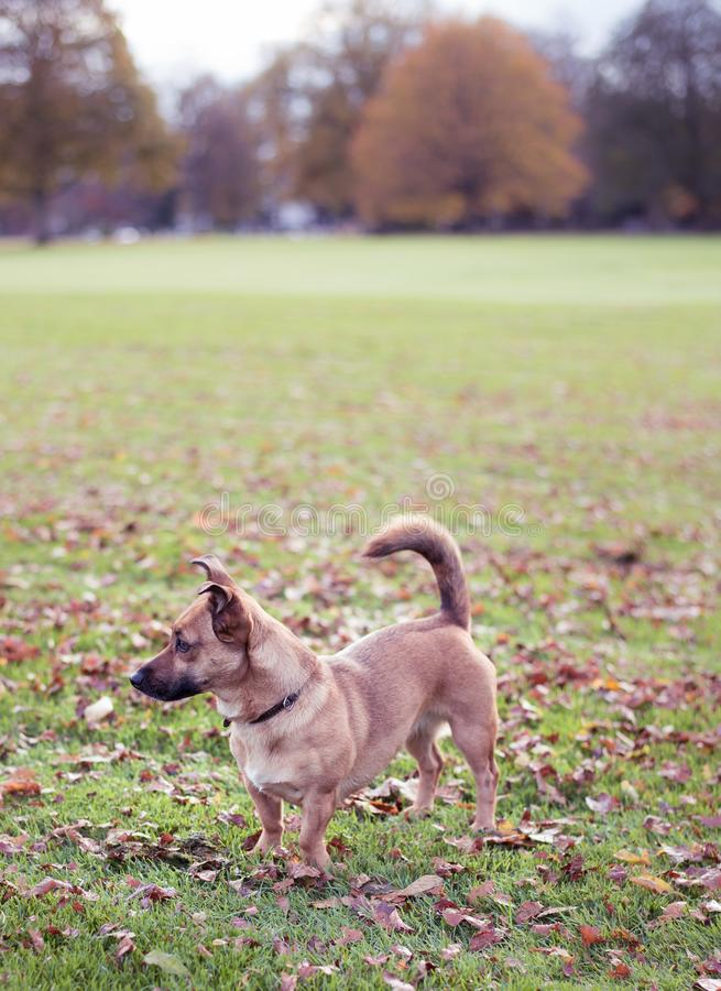 Homeless dog in park. Concept of volunteering and animal shelters royalty free stock photos