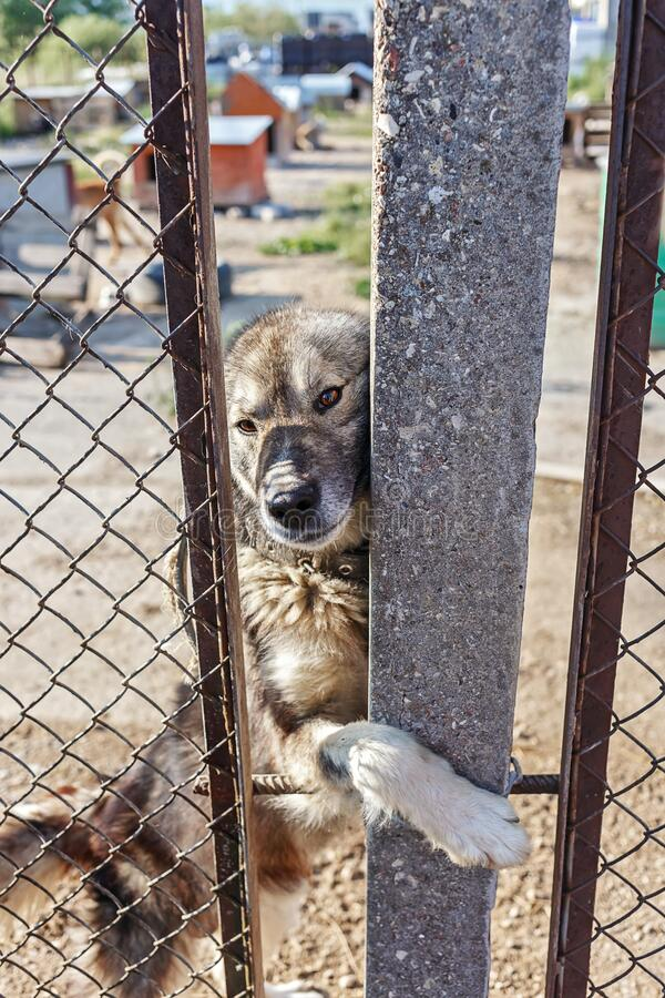 Homeless dog in a dog shelter stock image