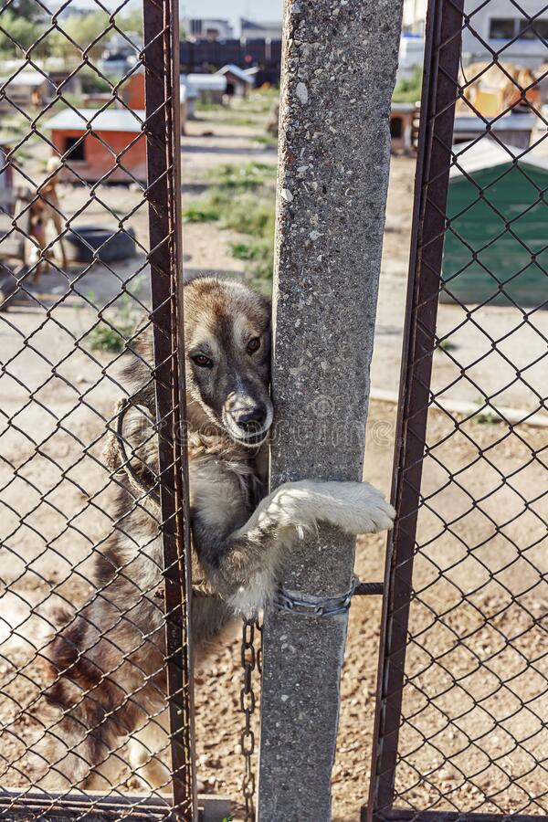 Homeless dog in a dog shelter royalty free stock images