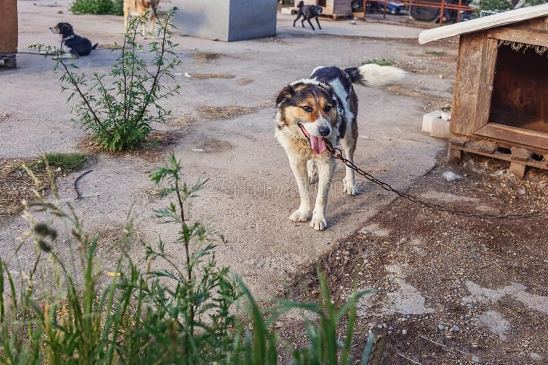 Homeless dog in a dog shelter royalty free stock photos
