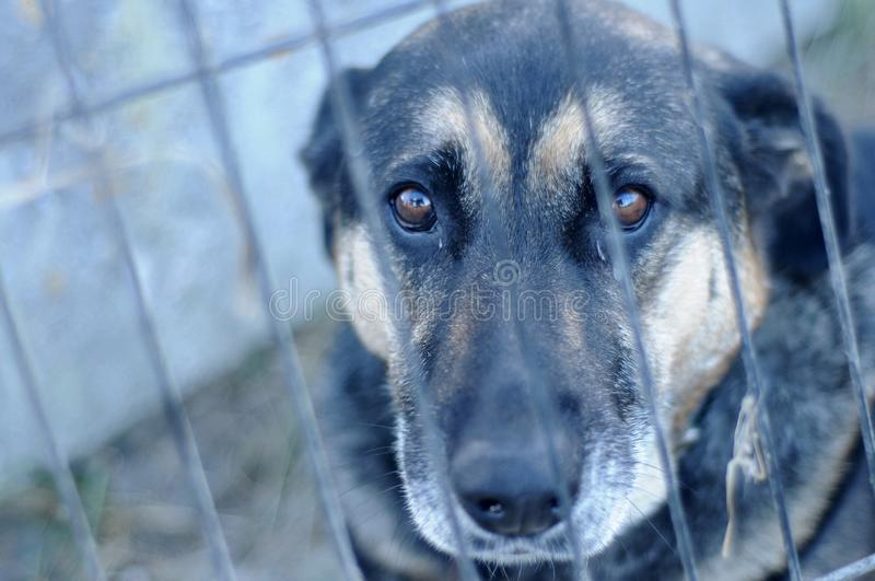 Homeless dog in the shelter. Picture homeless dog in the shelter. Cat locked in a cage stock photos