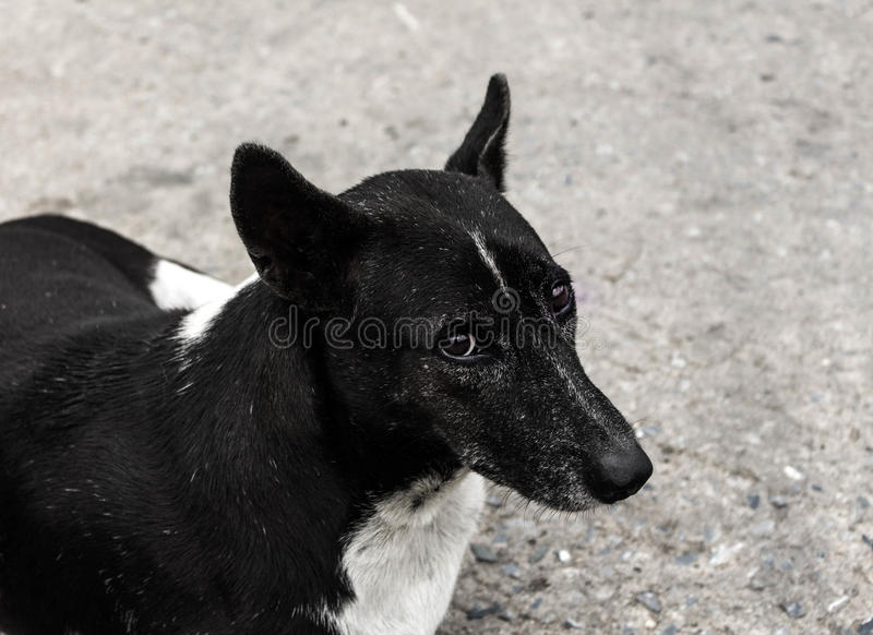 The homeless dog royalty free stock images