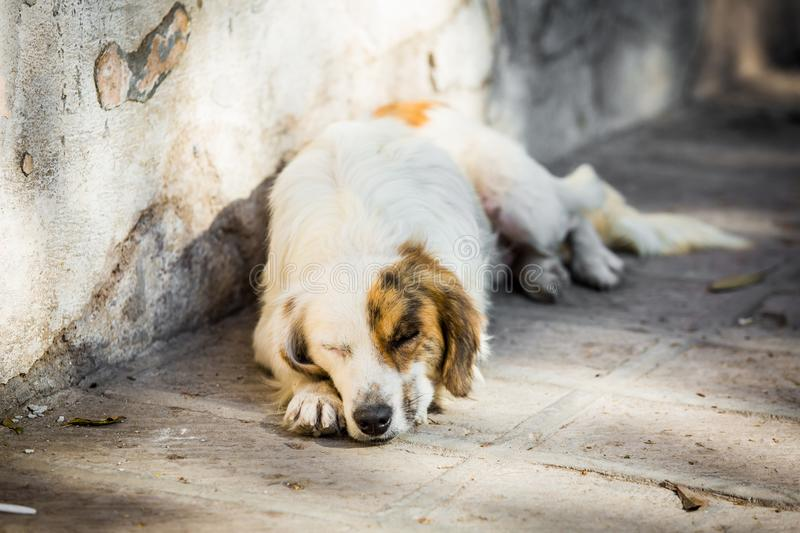 Homeless dog on the street royalty free stock image