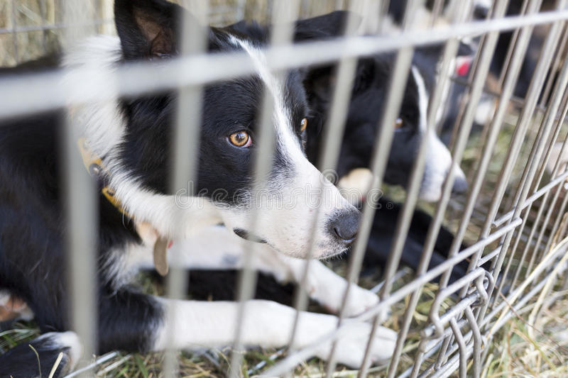 Homeless dogs in cages royalty free stock images