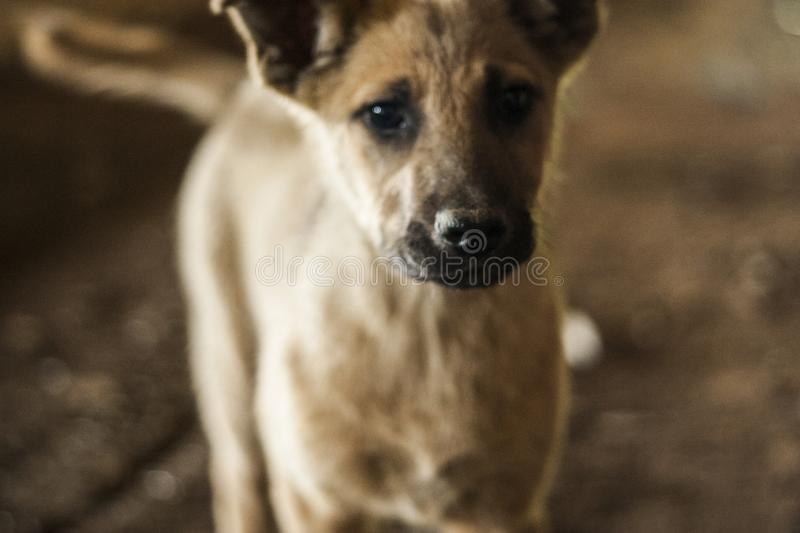 Homeless dogs. Pets. Dogs are walking on the street. The dog has lost its owner. Kennel for dogs. City services control dogs. Pretty dog stock photo