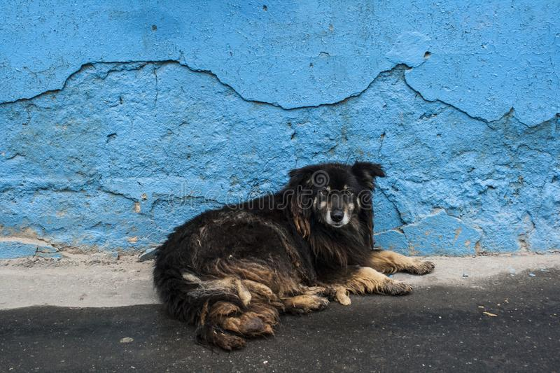 Homeless dogs. Pets. Dogs are walking on the street. The dog has lost its owner. Kennel for dogs. City services control dogs. Pretty dog stock photography