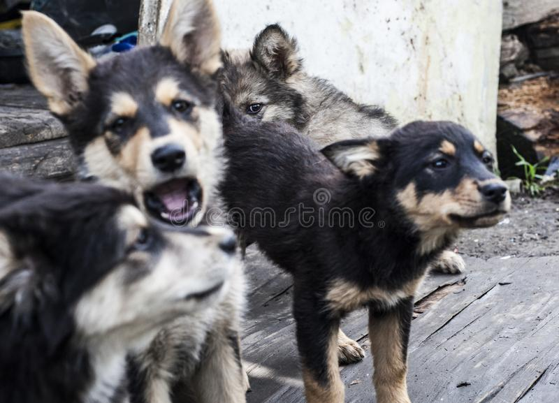 Homeless dogs. Pets. Dogs are walking on the street. The dog has lost its owner. Kennel for dogs. City services control dogs. Pretty dog royalty free stock image