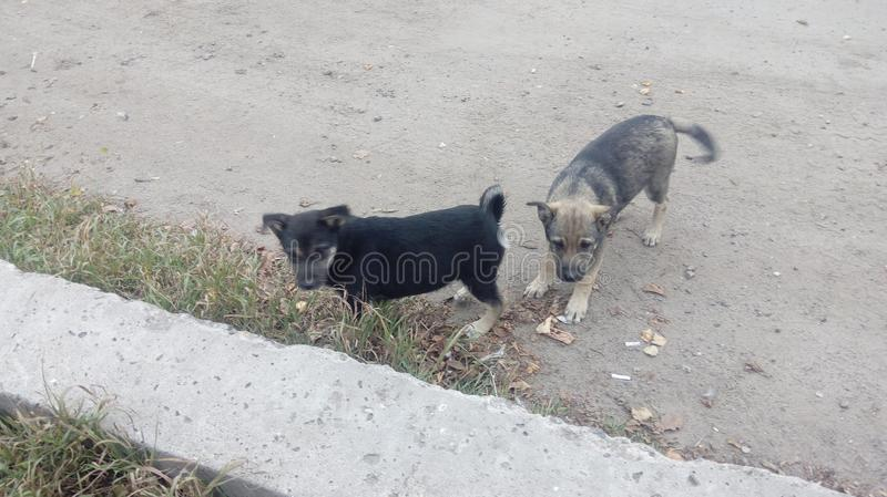 Homeless dogs. Pets. Dogs are walking on the street. The dog has lost its owner. Kennel for dogs. City services control dogs. Pretty dog royalty free stock photo