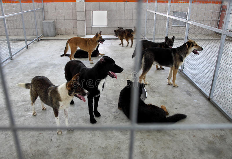 Homeless dogs shelter. Homeless dogs behind fence in shelter stock image