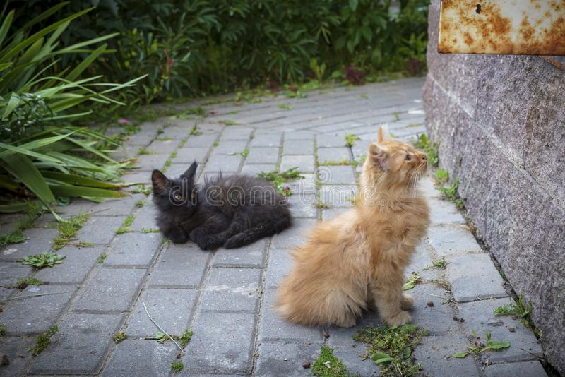 A family of small kitten in a city. A homeless family of small kitten in the Minsk city royalty free stock photography
