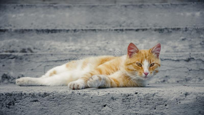 homeless ginger cat royalty free stock images