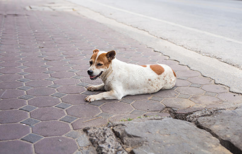 Homeless and hungry dog abandoned on the streets.  royalty free stock photo