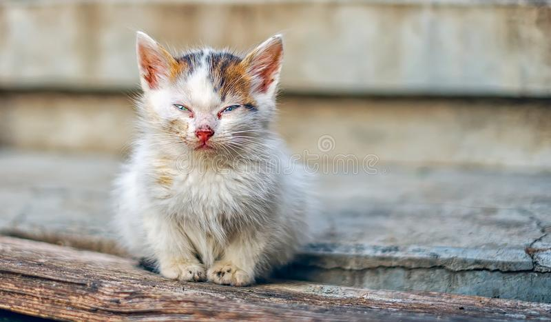 Homeless little cat on stairs. Close view royalty free stock photos