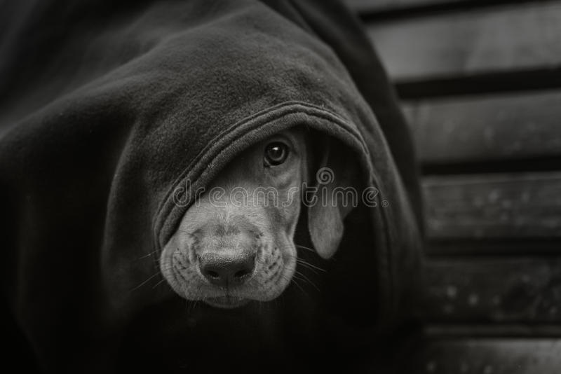 Homeless little puppy royalty free stock images