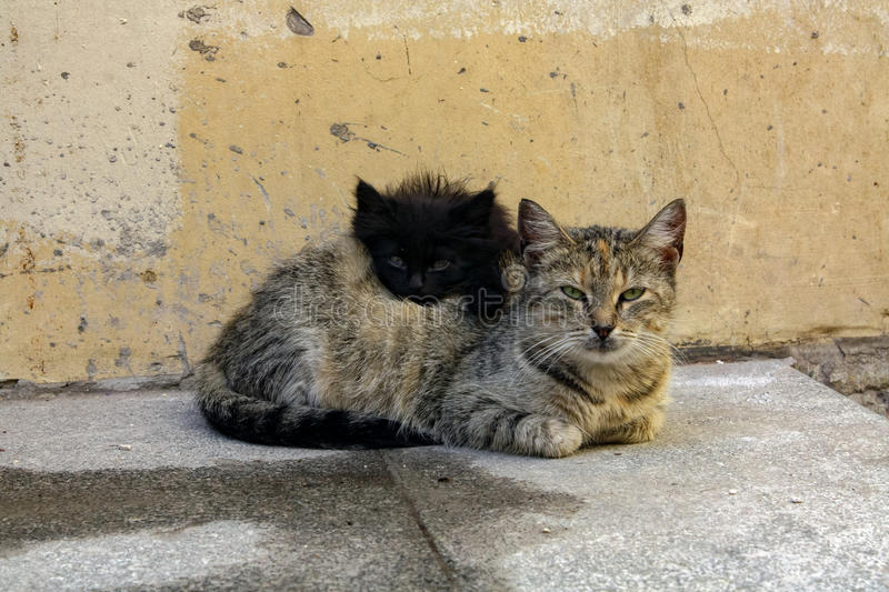 Homeless mother cat with the kitten stock images