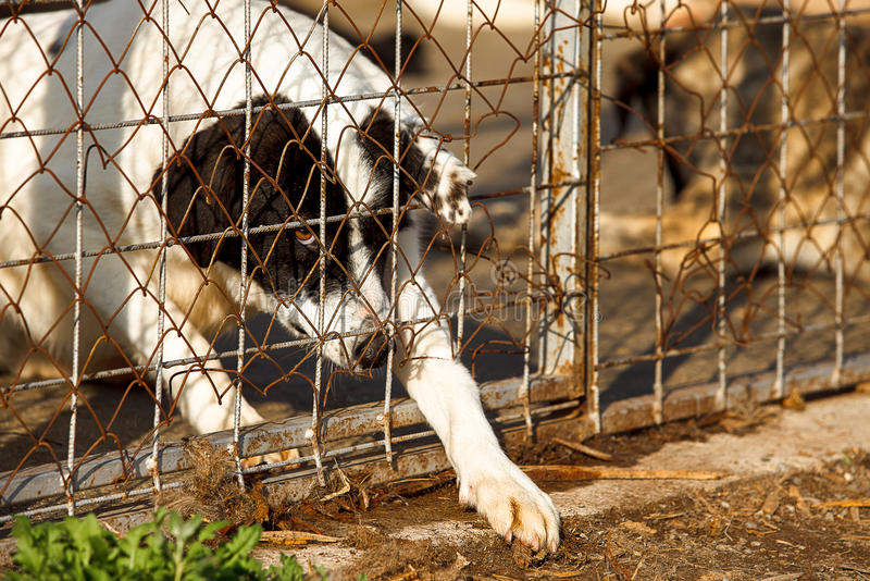 Homeless old dog shelter. A homeless old dog is trying to escape through a fеnce oh a shelter stock image