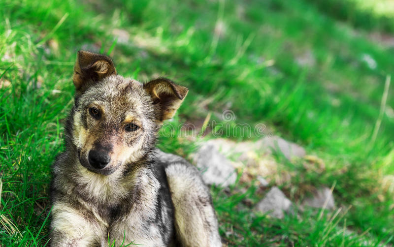 Homeless puppy dog on grass close up royalty free stock photo